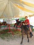 événement extérieur - tour de petits chevaux - fête champêtre